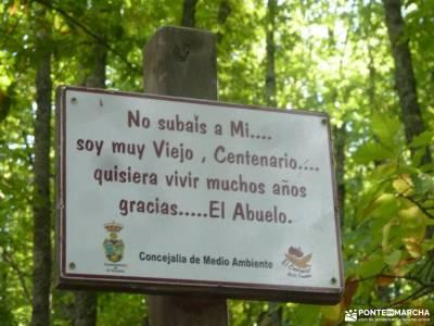 Castañar de El Tiemblo; embalse de la jarosa machota ermita san frutos club ribera turismo con niñ